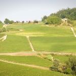 San Pietro - Azienda Agricola Vietto