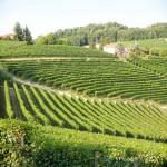 Allaria e Niko - Azienda Agricola Vietto