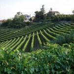 Allaria - Azienda Agricola Vietto