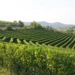 Trutun - Azienda Agricola Vietto