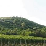 Bricco Pavia - Azienda Agricola Vietto